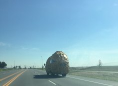A peanut truck. You see some shit out on the open roads.